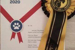 wystawa-psow-rok-2020-15